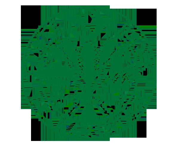 State-Bank-of-Pakistan-logo-png-download